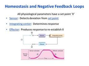 Homeostasis Negative Feedback Loop