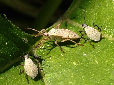 common garden pests and how to control them