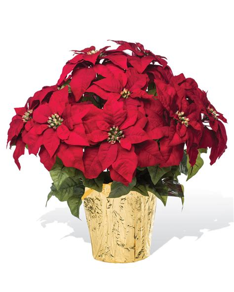 poinsettia plants extra large premier silk poinsettia plant at officescapesdirect