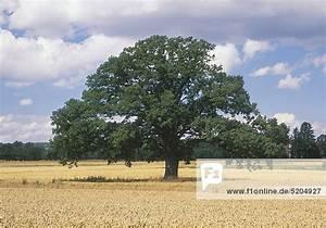 Bäume Umpflanzen Jahreszeit : baum botanik b ume feld felder jahreszeit jahreszeiten keiner landschaft lizenzfreies bild ~ Orissabook.com Haus und Dekorationen
