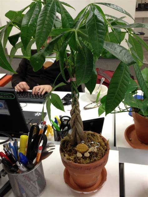 houseplants   time  repot  desk plant