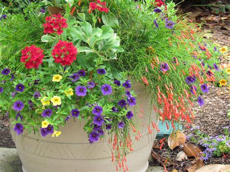 Container Garden  New Pins Pinterest