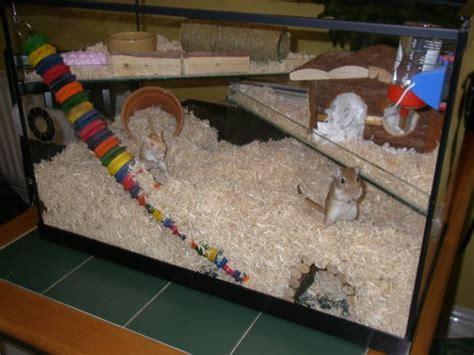 aquarium cages for hamsters gerbil housing p a w s