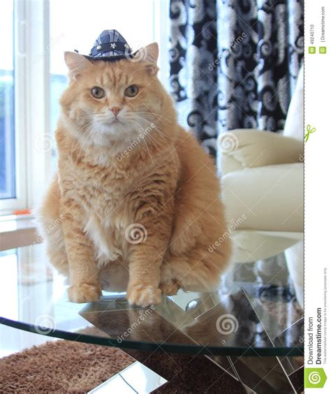 Cookie Cat With Cowboy Hat Stock Photo Image Of Camera