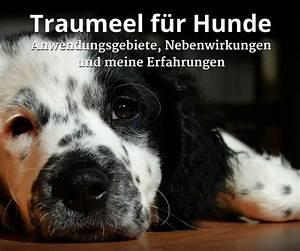 Nudeln Für Hunde : ber ideen zu hunde organisation auf pinterest hund diensthunde und hund zubeh r ~ Watch28wear.com Haus und Dekorationen