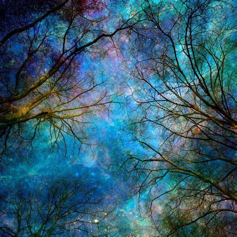 nature photography winter trees stars night sky blue