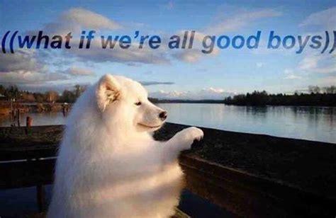 Good Boy Memes - 18 new heckin doggo memes daily dog memes
