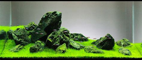 guide to aquascaping read my comprehensive guide on iwagumi aquascaping style