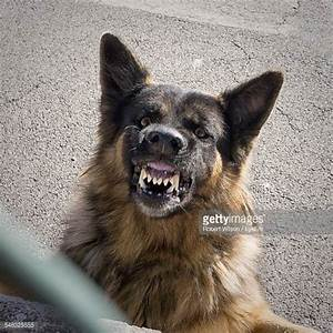 Growling Dog Stock Photos and Pictures | Getty Images