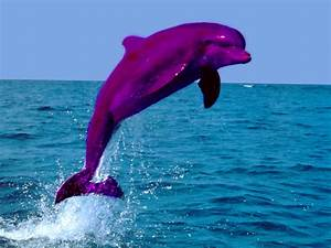 Cute Baby Pink Dolphins