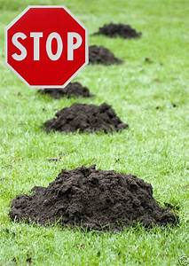 Maulwurfbekämpfung Im Garten : maulwurfgitter 280g m 1m x 50m zur maulwurfbek mpfung ~ Michelbontemps.com Haus und Dekorationen