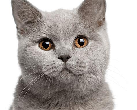 cat vaccination blakes veterinary surgeries