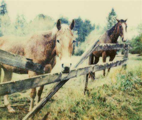 kind  fence   horse pasture