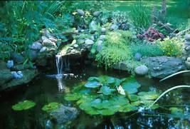 Water Garden Water Gardens Grow In Popularity But Require Caution