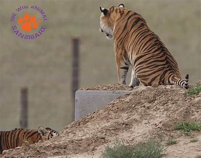 Sanctuary Wild Animal Caption Animals Than Wildanimalsanctuary