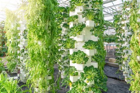 Vertical Hydroponic Gardening by How To Create A Vertical Hydroponic Gardening System