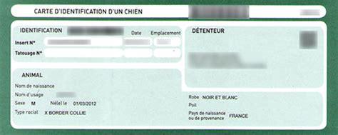 Identification Obligatoire Du Chien, Puce Ou Tatouage