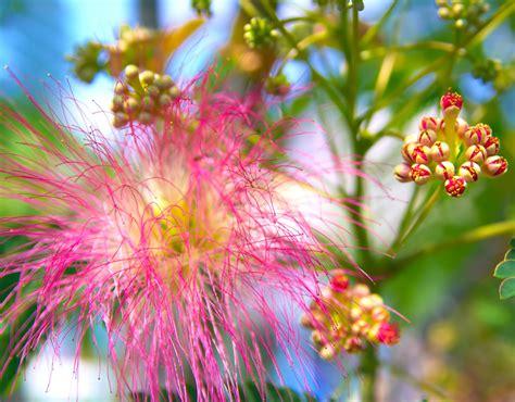 exotische pflanzen und tropische pflanzen eine