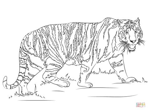Coloring Pages Tigers Print