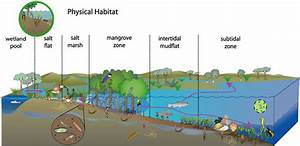 Physical Habitat