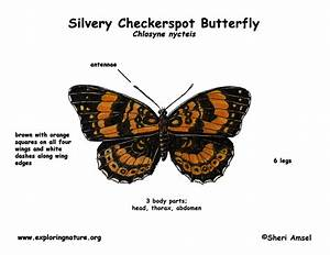 Butterfly  Silvery Checkerspot