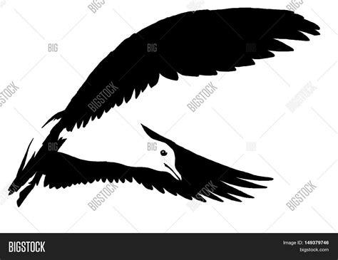 Black White Paint Draw Seagull Image Photo Bigstock