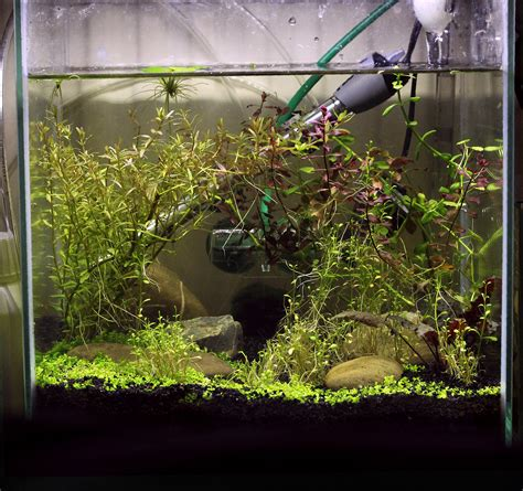 Aquascaping Forum by Aquascaping A Cube Aquarium The Planted Tank Forum
