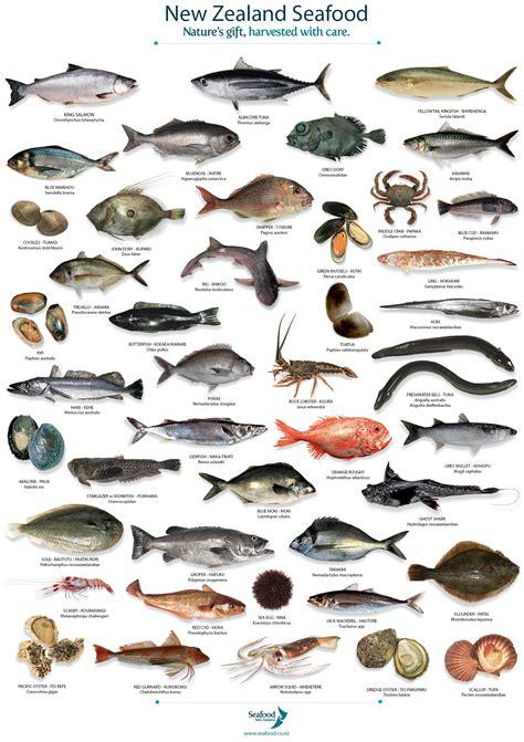 images  biologia marina  pinterest
