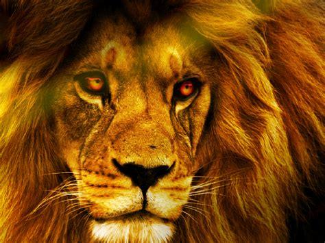 sanny lion  wallpaper  wallpapersafari