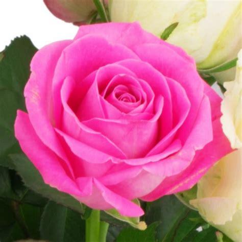 rosa weisse rosen blumenversand bluvesade blumen