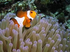 Sea Anemone An Underwater Photographeru002639s Delight Aquaviews