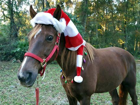 elf hat  horse  pony equine christmas elf hat fun