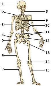 Free Anatomy Quiz