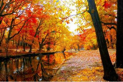 Autumn Fall Landscape Leaves Nature Forest Tree