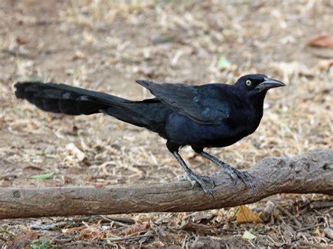 South Dakota Birds And Birding
