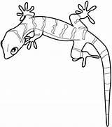 Gecko Coloring sketch template