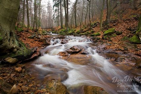 ilsetal november harz national park dave derbis