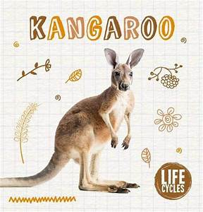 Diagram Kangaroo Life Cycle