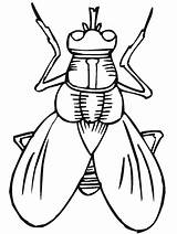 Coloring Pages Primarygames Insect Insects Bug Science Bugs Printable Fly Cut Fun Activity sketch template