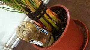 Pflanzen Bewässern Pet Flaschen : flaschen statt blumen gie en frag mutti ~ Whattoseeinmadrid.com Haus und Dekorationen
