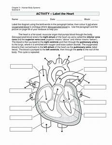 Cell Cycle And Mitosis Coloring Answer Key  U2013 Regionpaperco