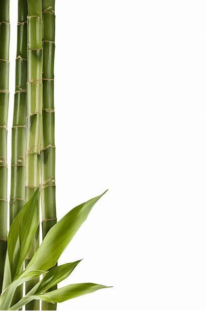 Bamboo Stick Clipart Tree Transparent Bambu Tumbuhan