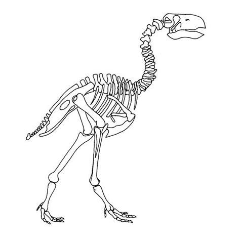 Kleurplaat Skelet Mens by Dino Skelet Kleurplaat Zoeken Dino S