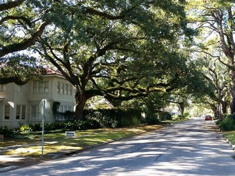 tree lined streets in the garden district baton la