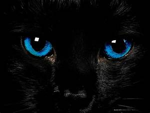 Black Cat with Blue Eyes by Cometsong on DeviantArt