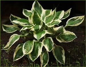 Plantes D Ombre Extérieur : centre jardin delorme plantes d 39 ext rieur lanaudi re ~ Melissatoandfro.com Idées de Décoration