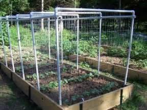pvc bean or cucumber trellis garden i am