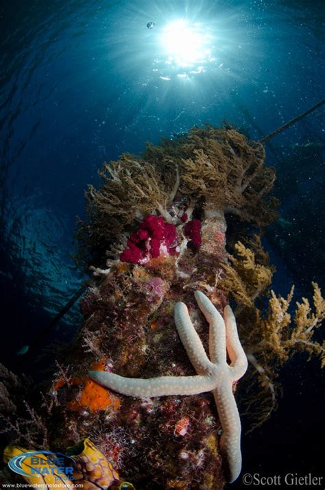 Top 5 Settings To Improve Your Underwater Photography
