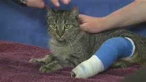 cat splint how to make a splint for a cat