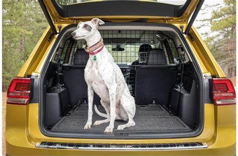 cars  dogs  news world report